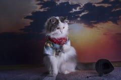 Katten reser på att lifta för solnedgång fotografering för bildbyråer