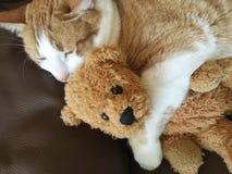 Katten rymmer den gamla nallebjörnen royaltyfria bilder