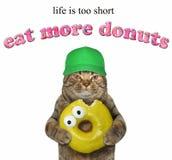 Katten rymmer en gul biten munk royaltyfri fotografi