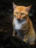 Katten såg förvirrad Arkivfoto