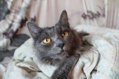Katten` s nieuwsgierigheid Royalty-vrije Stock Afbeeldingen