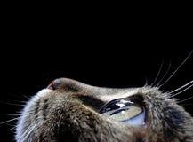Katten` s oog Stock Foto's