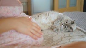 Katten ser den gravida husmor Kvinnan slår hennes stora buk Husdjuret ligger på sängen nära den gravida flickan lager videofilmer