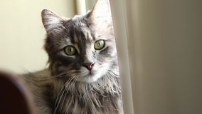 Katten ser det utvändiga fönstret arkivfilmer