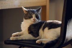 Katten ser i överraskning på dammflyget omkring arkivfoton