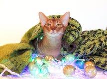 Katten ser kameran och tänker om magin Ny Abyssinian katt för års` s med bollar och girlanden Göra perfekt för annonsering, royaltyfria foton