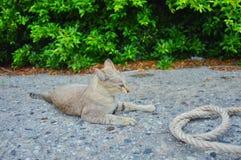 Katten ser naturträdvägen Arkivfoton