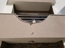 Katten ser ner från balkongen royaltyfria bilder