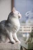 Katten ser till och med fönstret royaltyfri bild