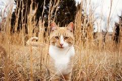 Katten ser till och med högväxta ogräs Arkivbild