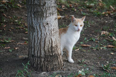 Katten ser ut bakifrån ett träd Arkivfoto