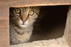 Katten ser ut dörrutklippdroppen Arkivfoton