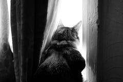 Katten ser ut fönstret Arkivfoto