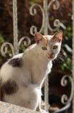 Katten sitter i solljuset arkivfoton