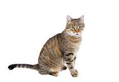 Katten sitter och ser framåt Arkivbilder