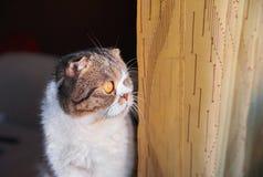 Katten sitter och ser ut fönstret i förväntan arkivfoton