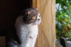 Katten sitter och ser ut fönstret i förväntan fotografering för bildbyråer