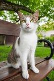 Katten sitter på bänk Arkivfoto