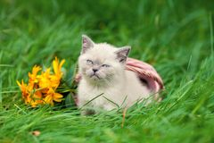 Katten sitter på den gröna gräsmattan royaltyfria foton