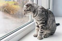 Katten sitter på en fönsterbräda arkivfoto