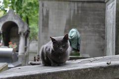 Katten sitter på en grav Royaltyfri Fotografi