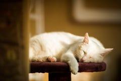 Katten sitter på en gul bakgrund Royaltyfri Foto
