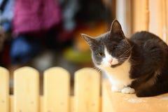 Katten sitter på en gul bakgrund Royaltyfria Foton