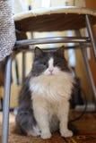 Katten sitter på en gul bakgrund Fotografering för Bildbyråer