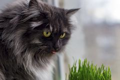 Katten sitter på fönstret Arkivfoto