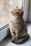 Katten sitter på fönstret fotografering för bildbyråer