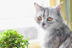 Katten sitter på fönstret med blomman arkivbilder