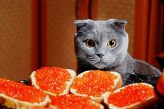 Katten sitter på ferietabellen Arkivfoto