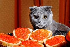 Katten sitter på ferietabellen Royaltyfria Foton