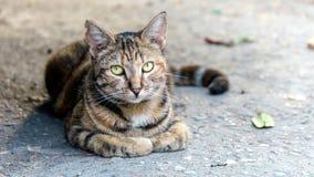Katten sitter på jordningen på den forntida gatan Arkivbild