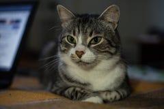 Katten sitter på sängen royaltyfria foton