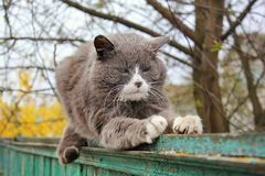 Katten sitter på staketet arkivbilder