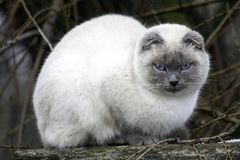 Katten sitter på taket royaltyfri fotografi
