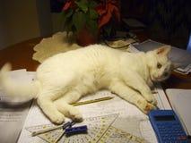 Katten ska inte låta mig studera Fotografering för Bildbyråer