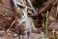Katten som går själv royaltyfri fotografi
