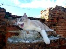 Katten som lägger på, fördärvar av tegelstenväggen på luften Arkivbild