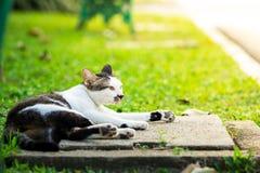Katten som lägger på manhålet under solljus i, parkerar royaltyfria foton