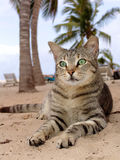 Katten som lägger på stranden med, gömma i handflatan Arkivfoton