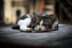 Katten som ligger och, kopplar av mycket bekvämt royaltyfri fotografi