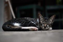 Katten som ligger och, kopplar av mycket bekvämt arkivfoto