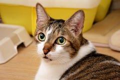 Katten som ner ligger och, vänder hans head baksida arkivbilder