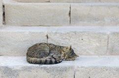 Katten som sover i en gata över antikvitet, kliver stenar Fotografering för Bildbyråer