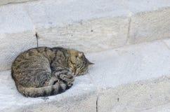 Katten som sover i en gata över antikvitet, kliver stenar Royaltyfri Foto