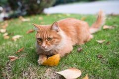 Katten som spelar på gräsmattan Royaltyfri Fotografi