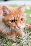 Katten som spelar på gräsmattan Royaltyfri Bild
