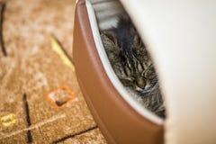 Katten sover i hans hus Arkivfoton